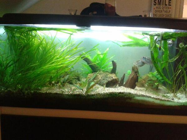 komplett aquarium 300 lt in starnberg fische aquaristik kaufen und verkaufen ber private. Black Bedroom Furniture Sets. Home Design Ideas