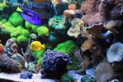 Korallen(anbei Orginalbilder!)