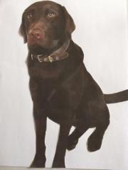 Labrador, Rüde, 2