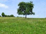 Landwirtschaftliche Flächen gesucht
