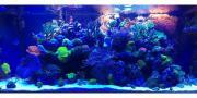 laufend Korallenableger aus