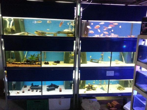 malawi zuchtanlage 2500l anlage in wei bach fische aquaristik kaufen und verkaufen ber. Black Bedroom Furniture Sets. Home Design Ideas