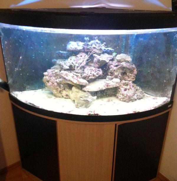 meerwasser aquarium komplett 350l eckaquarium in ringgau. Black Bedroom Furniture Sets. Home Design Ideas
