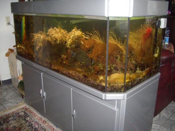 meerwasser aquarium komplett mit fischen korallen und. Black Bedroom Furniture Sets. Home Design Ideas