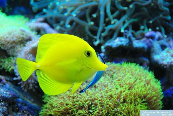 suche aquarium neu und gebraucht kaufen bei