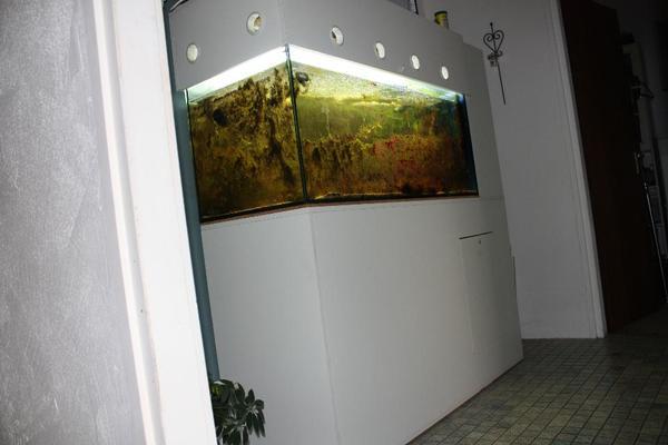 meerwasseraquarium 300l komplett mit besatz 300euro in. Black Bedroom Furniture Sets. Home Design Ideas