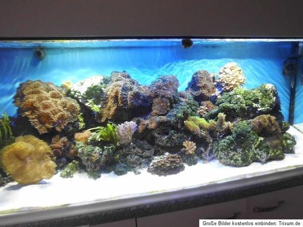 meerwasseraquarium komplett zu verkaufen in obersch na