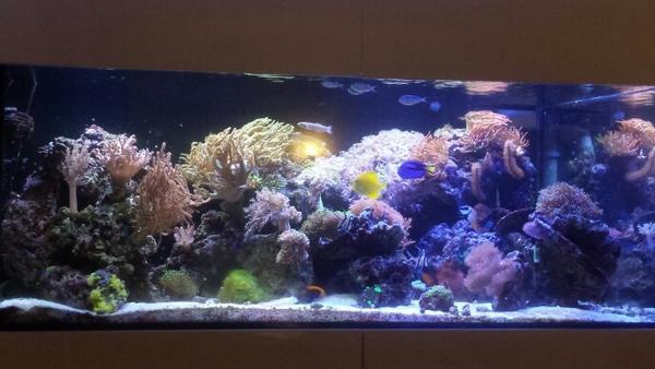 meerwasseraquarium lebewesen fische korallen lebendgestein in hersbruck fische aquaristik. Black Bedroom Furniture Sets. Home Design Ideas