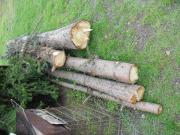 Nadelbaum Stämme 4