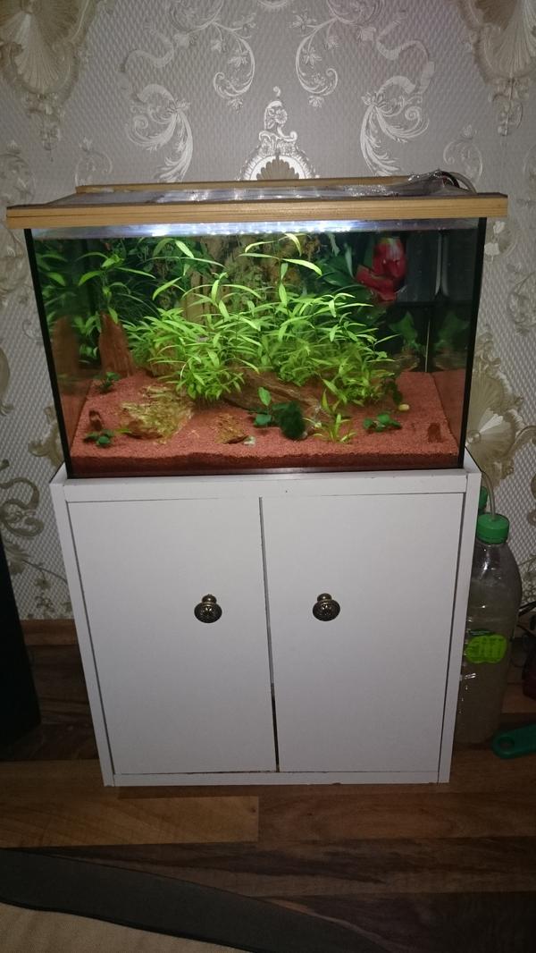 nano aquarium garnelen aquascaping in eberbach fische aquaristik kaufen und verkaufen ber. Black Bedroom Furniture Sets. Home Design Ideas