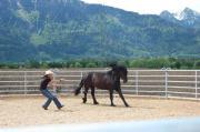 Native Amerikan Horsemanship -