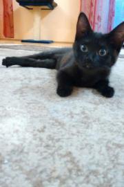 Noch 1 katzenbaby