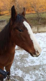 Paint Horse, Verkauf