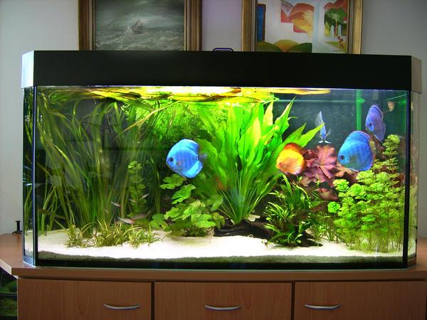 aquarium 130 neu und gebraucht kaufen bei. Black Bedroom Furniture Sets. Home Design Ideas
