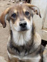 Peanut ist eine ca.16 Wochen junge Hündin, lieb und verschmust, sucht ihre Familie Mischling, Welpe, weiblich, Farbe: gefleckt, EU-Heimtierausweis, aus Tierheim, entwurmt, gechipt, geimpft, für Hundeanfänger geeignet, verträglich ... 330,- D-13189Berlin P - Peanut ist eine ca.16 Wochen junge Hündin, lieb und verschmust, sucht ihre Familie Mischling, Welpe, weiblich, Farbe: gefleckt, EU-Heimtierausweis, aus Tierheim, entwurmt, gechipt, geimpft, für Hundeanfänger geeignet, verträglich
