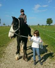 Pferd/Pony versorgen