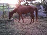 Pferde\\2 Wallache**