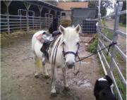 Pferdeboxen frei !! Kleiner