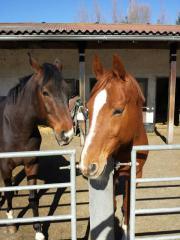 Pferdeboxen zu vermieten