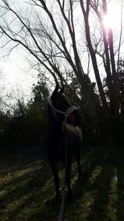 Pferdeverrückte Menschen herzlich