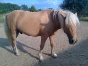 Pony-Mix