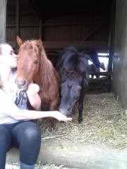 Pony-Wallach/Pony