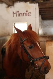 Reitbeteiligung für Minnie