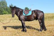 Reitbeteiligung...Pferd sucht