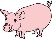 Schlachtschwein