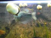 Schnecken für Aquarium