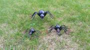 Spinnenfamilie