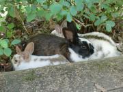 Spontan Tierbetreuung für
