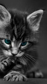 Suche Katze