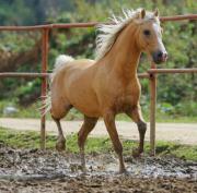 Suche Pferd