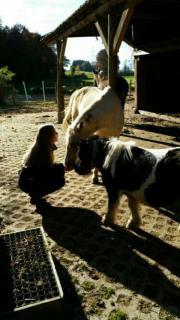 Suche Pferd für
