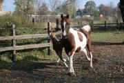 Suche Pferdebesitzerin / Pferdebesitzer