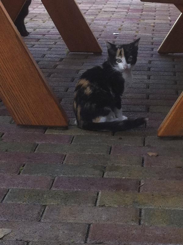 S e babykatzen zu verschenken in steinau katzen kaufen for Fenster zu verschenken