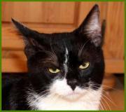 Sylvester, 2 Jahre -