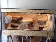 Terrarium mit Felsrückwand Echsen, Terrarium. Verkaufe hier sehr schönes selbstgebautes Terrarium mit Felsrückwand es ist ... VHS D-55566Bad Sobernheim Heute, 16:02 Uhr, Bad Sobernheim - Terrarium mit Felsrückwand Echsen, Terrarium. Verkaufe hier sehr schönes selbstgebautes Terrarium mit Felsrückwand es ist