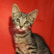 Tierschutz] - Katzenmädchen Lisa