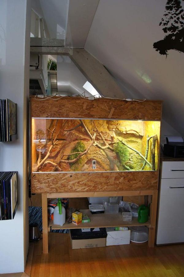 verkaufe terrarium reptilien terraristik. Black Bedroom Furniture Sets. Home Design Ideas
