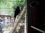 vogelvoliere,diverse käfige