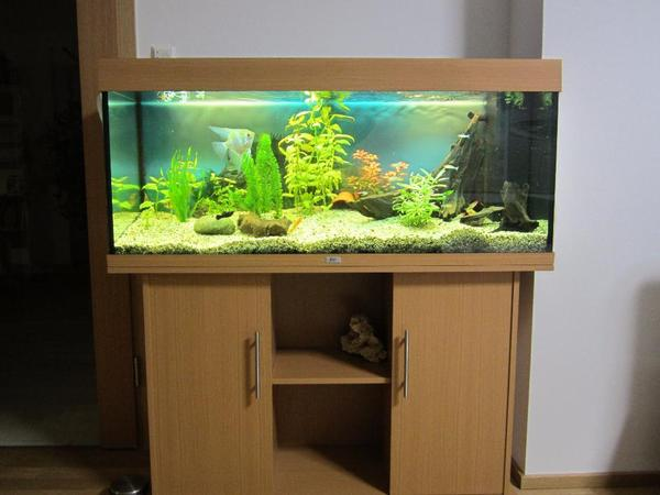 Aquarium fischbesatz neu und gebraucht kaufen bei for Aquarium gebraucht