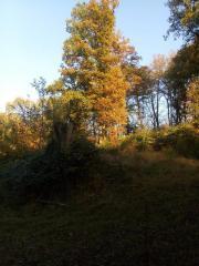 Waldgrundstueuck mit einem