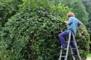 Wer sucht Gartenhilfe