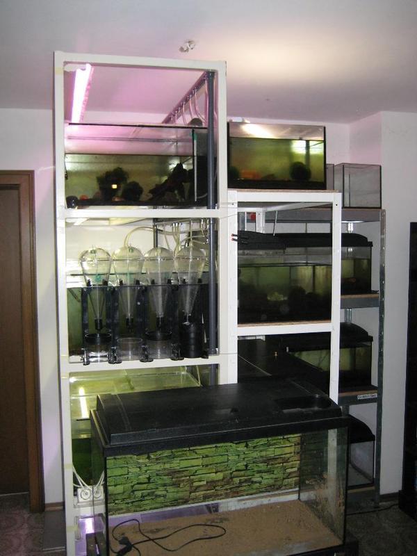 zuchtanlage garnelen aquarium in obing fische aquaristik kaufen und verkaufen ber private. Black Bedroom Furniture Sets. Home Design Ideas