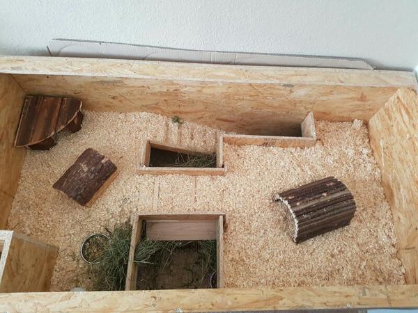 5 meerschweinchen eigenbau k fig in gera kleintiere. Black Bedroom Furniture Sets. Home Design Ideas