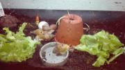 Achatschnecken