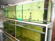 Aquarien zum Verkaufen