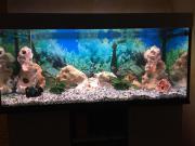 Aquarium 100x50x50 mit